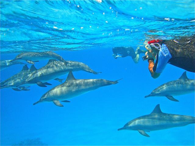 Snorkeling avec les dauphins