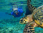 Visite guidée par une tortue