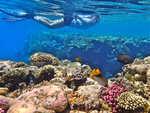 Exploration parmi les poissons et les coraux